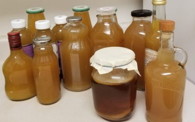 Discover How To Make Healthy Kombucha From Scratch